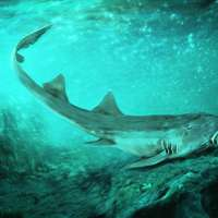 image: New Cretaceous Shark Spe…