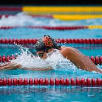 image: USC Men's Swim Team Down…